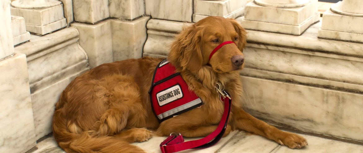 Greeting Service Dogs … or any dog for that matter